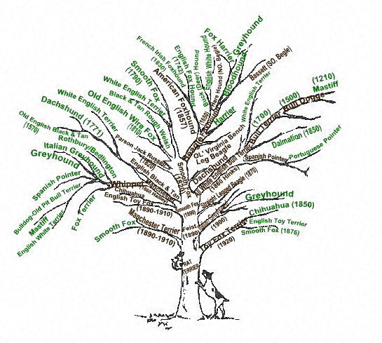 rtfamilytree